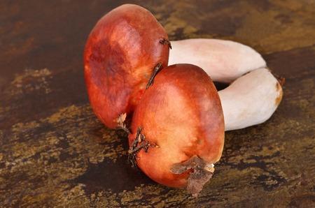 mycology: Boletus edulis mushroom on wooden board background Stock Photo