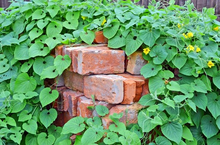 red clay: Stack of old red clay brick in plant