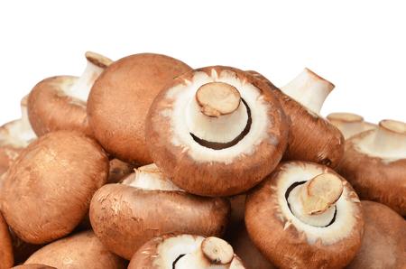 true: Champignon (True mushroom), isolated on white background