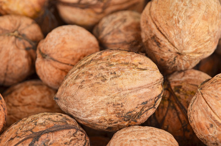 circassian: Ripe walnut (Juglans regia), close up, DOF
