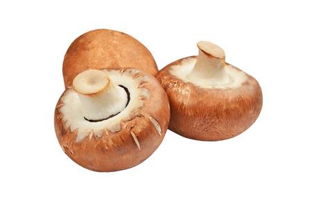 agaricus: Champignon (True mushroom), isolated on white background