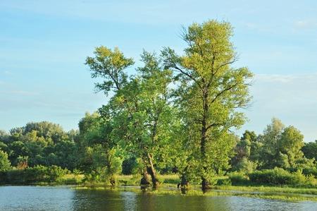 arbol alamo: Álamo árbol sobre el lago del bosque, Kiev, Ucrania