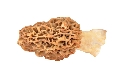 esculenta: Morchella esculenta mushroom, isolated on white background Stock Photo