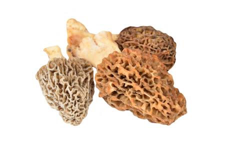 mushrooming: Morchella esculenta mushroom, isolated on white background Stock Photo
