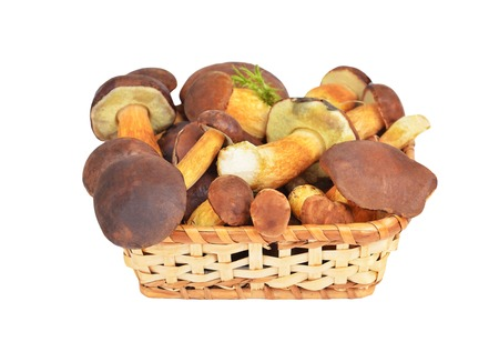 edulis: Boletus edulis mushroom in basket, isolated on white background. DOF