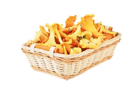 mycology: Chanterelle mushroom in basket, isolated on white background Stock Photo