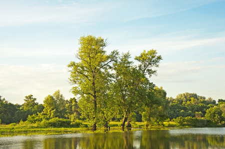 arbol alamo: Poplar tree over forest lake, Kiev, Ukraine Foto de archivo