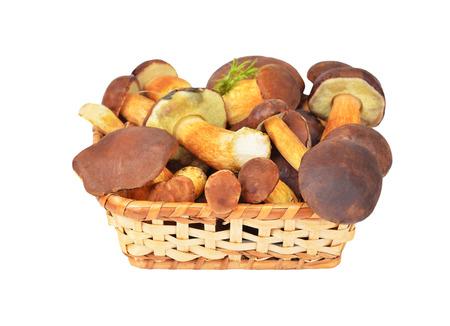 Boletus edulis mushroom in basket, isolated on white background. DOF