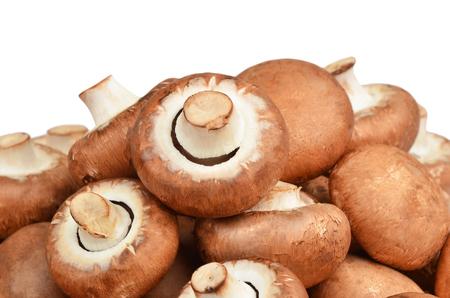 mushrooming: Champignon (True mushroom), isolated on white background