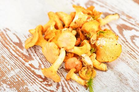 mushrooming: Chanterelle mushroom on textured vintage wooden background