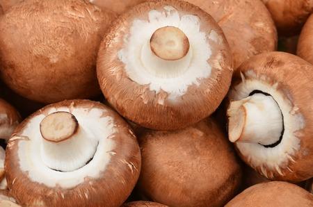 mushrooming: Fresh, raw and whole champignon (True mushroom)