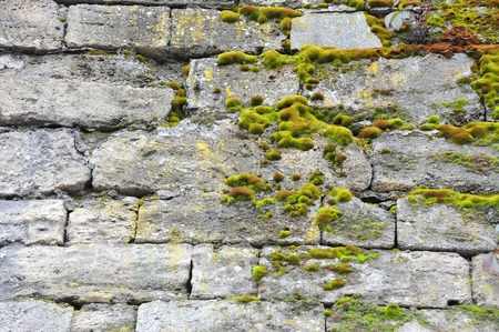 coquina: Green moss plant on shell rock wall