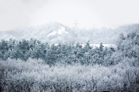 Winter forest with hoarfrost in blue tone Stock Photo