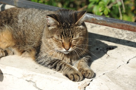 Cat rest on city street at summer Stock Photo