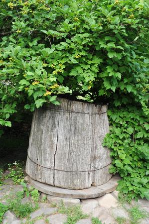 Antique wooden well under viburnum tree, Ukraine