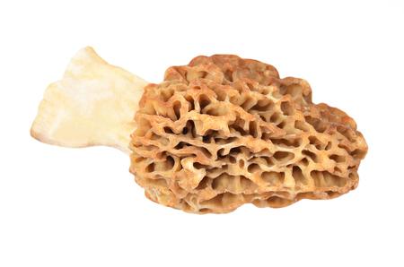Morchella esculenta 버섯, 흰색 배경에 고립 된 스톡 콘텐츠