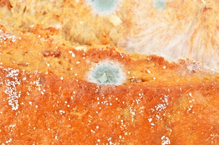 Molded loaf of bread, close up shot Stock Photo