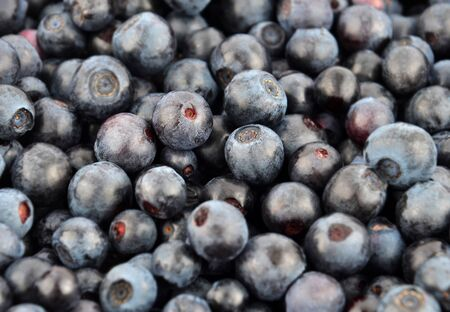 Fresh blueberry close up as natural background