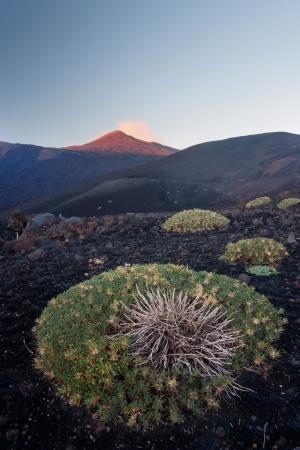 sicily: Mount Etna at sunrise in Sicily, Italy