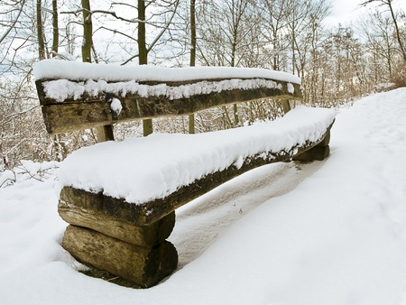 bench in a snowy landscape photo