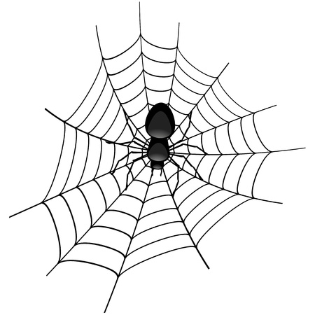 arachnid: illustration of a spider in a cobweb