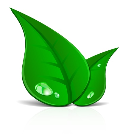 green leafs: detailed illustration of green leafs illustration Illustration