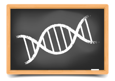 detailed illustration of a blackboard with a DNA String, eps10 vector, gradient mesh included Vector