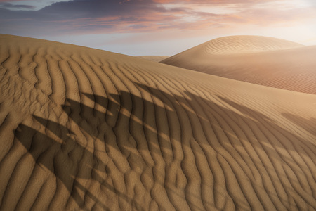 shadows of a camel caravan on desert sand dunes in the evening