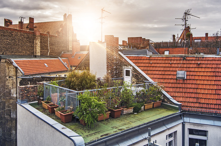 small rooftop garden with lots of potted plants on a sunny evening