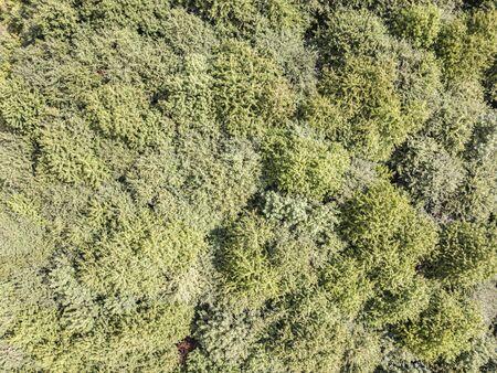 Tree tops seen from above, drone shot Standard-Bild