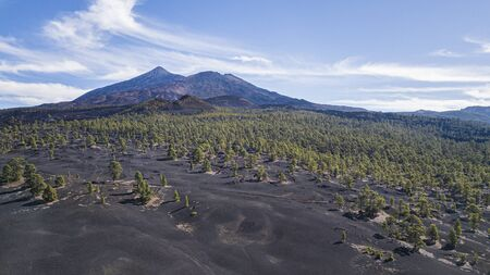 Aerial view of Chinyero Forest on black lava fields with Teide Volcano in the back, Tenerife, Canary Islands, Spain
