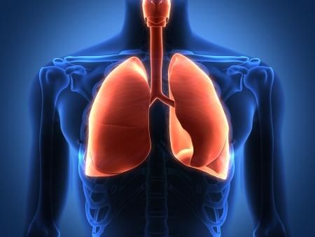 organos internos: Prestaci�n intestinales �rganos internos