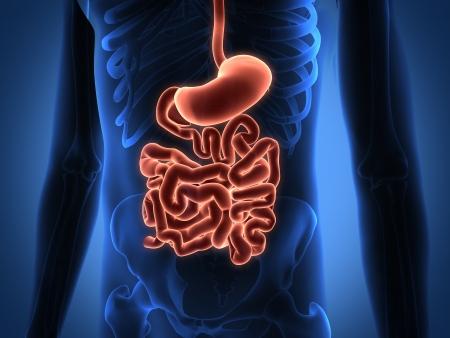 eardrum: Rendering Intestinal internal organs