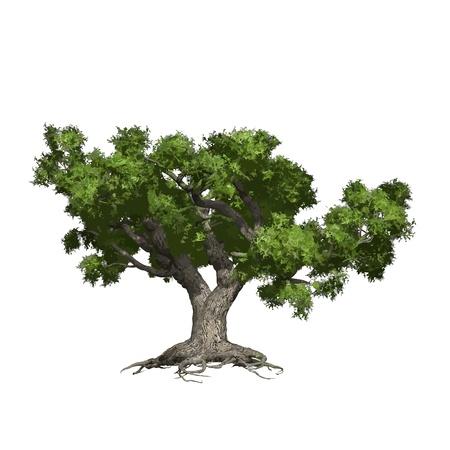 Quercia albero isolato, vettore, illustrazione
