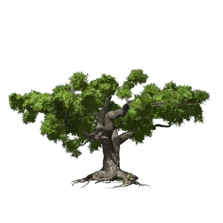 Oak tree isolated  Vector illustration