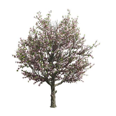 Appelboom geïsoleerde Vector illustratie Stock Illustratie