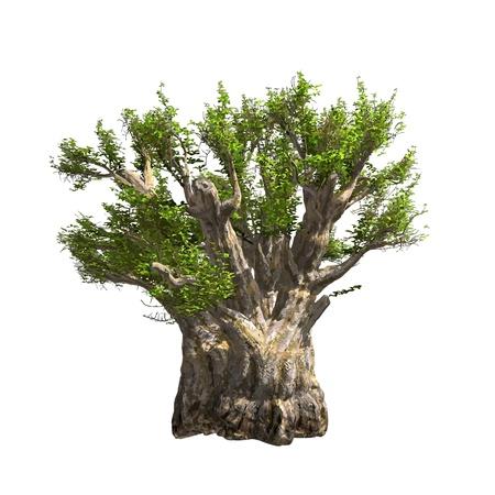 Baobab boom geïsoleerd vector illustratie