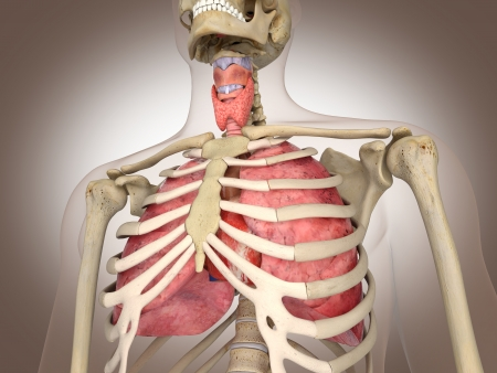 3D Rendering Intestinal internal organ Stock Photo - 19434629