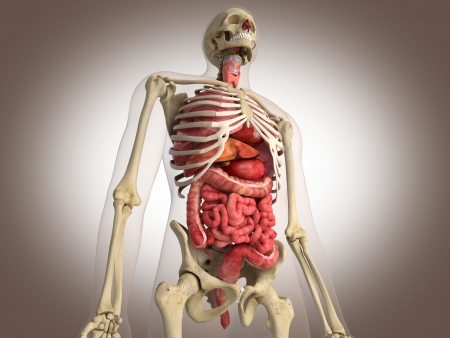 four chambers: 3D Rendering Intestinal internal organ Stock Photo