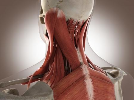筋肉マン 写真素材 - 19434628