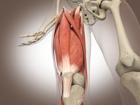 3D Rendering Intestinal internal organ Stock Photo - 19676143