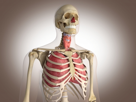3D Rendering Intestinal internal organ Stock Photo - 19676133