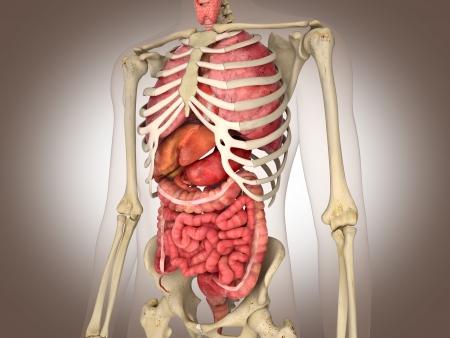 3D Rendering Intestinal internal organ Stock Photo - 19676147