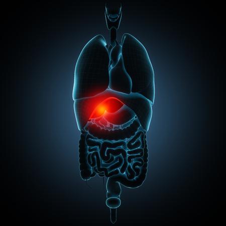 higado humano: ver otra ilustración de la enfermedad en mi cartera Foto de archivo