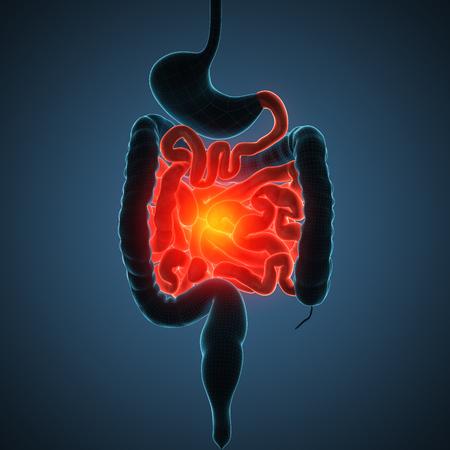 anatomically accurate 3d render illustration Standard-Bild