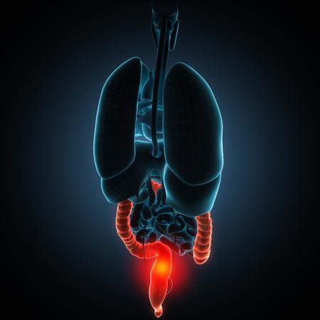 anatomisch genaue 3D Render-Abbildung
