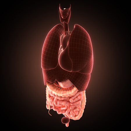 colon surgery: Its part of illustration set of human anatomy. See other works in my portfolio