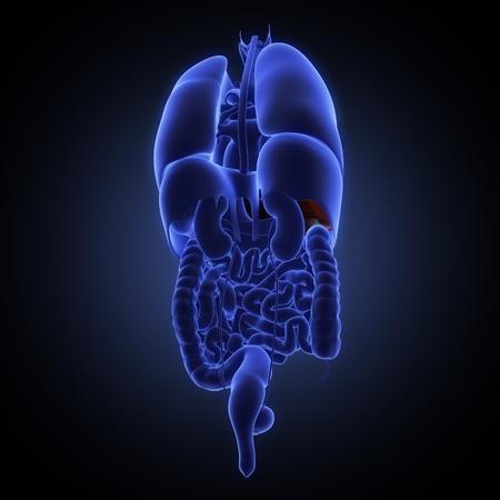 vein valve: Its part of illustration set of human anatomy. See other works in my portfolio