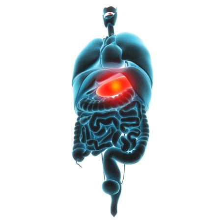 conduct: liver organ pain 3d illustration