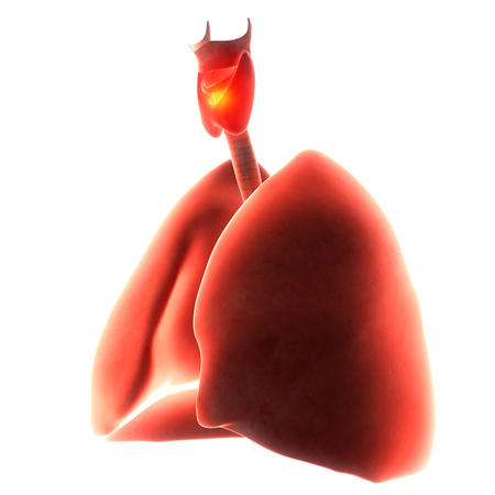 inflammated: lungs organ pain  3d illustration Stock Photo